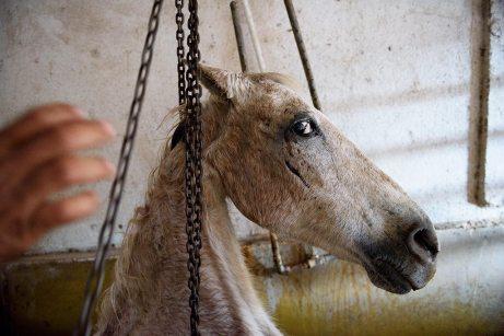 En muy mal estado, a veces los caballos tienen que ser remolcados.