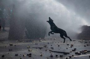 MATÍAS BAGLIETTO Chile, noviembre de 2019 Un perro ladra durante la represión de carabineros a los manifestantes que protestan contra el gobierno chileno en Valparaíso.