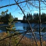 Paubäckens utlopp i Umeälven
