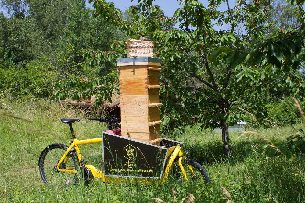 Épisode 86 : des abeilles et des vélos