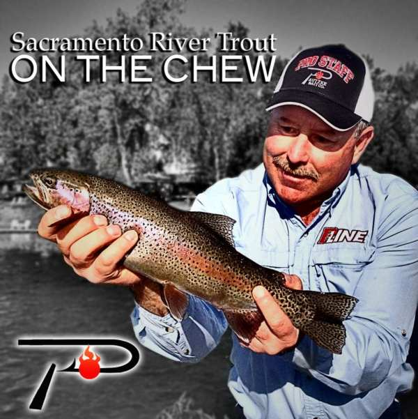 Sacramento River Trout On The Chew Pautzke Bait Co