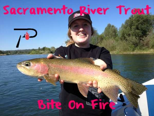 Sacramento River Trout Bite On Fire Pautzke Bait Co