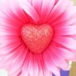 floarea dragostei