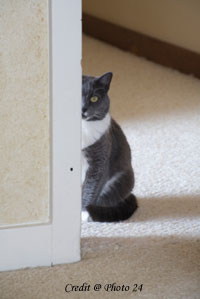 stop cat from peeing on rug | Home Decor