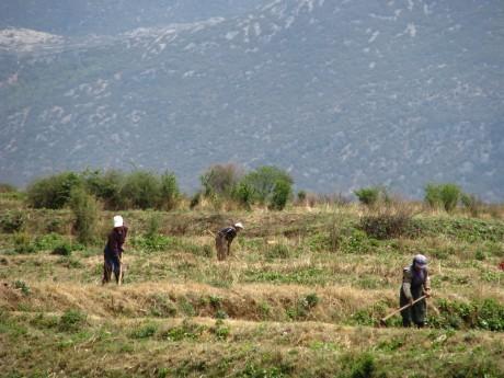 Lijiang - Baisha - rower - góry 6