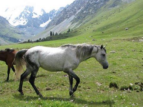 Treking wgórach Tien Shan (Kirgistan) 12