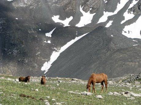 Treking wgórach Tien Shan (Kirgistan) 61