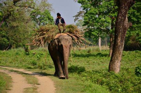 Park Narodowy Chitwan 1