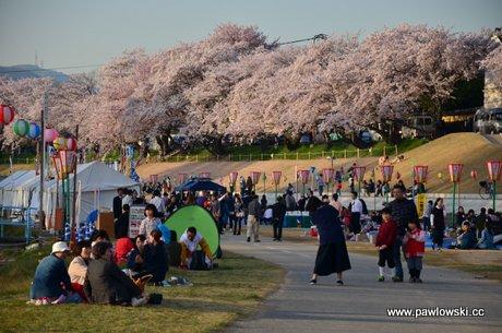 Święto kwitnienia wiśni wJaponii