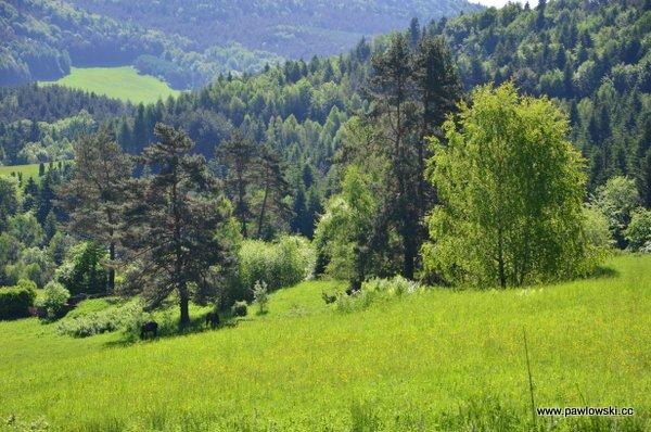 Główny Szlak Beskidzki; Mochnaczka Niżna - Bacówka PTTK wBartnem 10