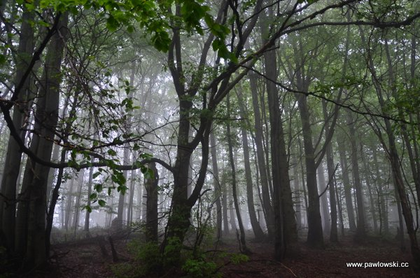 Główny Szlak Beskidzki; Puławy Górne - Prełuki 13