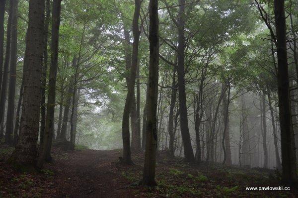Główny Szlak Beskidzki; Puławy Górne - Prełuki 14
