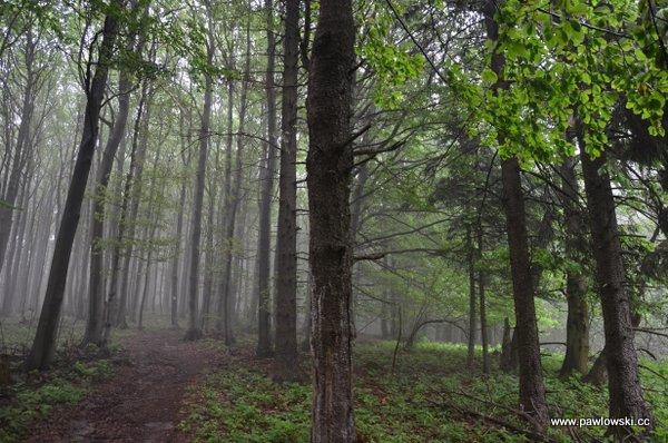 Główny Szlak Beskidzki; Puławy Górne - Prełuki 18