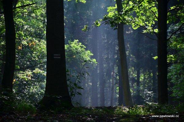 Główny Szlak Sudecki; Złoty Stok - Piotrowice Nyskie 8