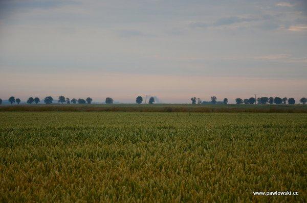 Główny Szlak Sudecki; Piotrowice Nyskie - Schronisko PTTK PodBiskupią Kopą 14
