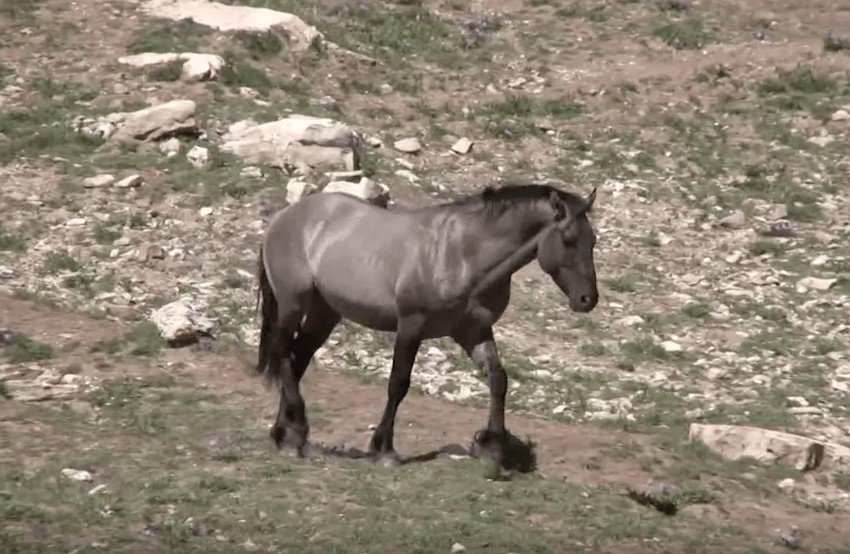 She Spots A Horse In The Mountains. As She Films. She Captures Something AMAZING. « Paw My Gosh