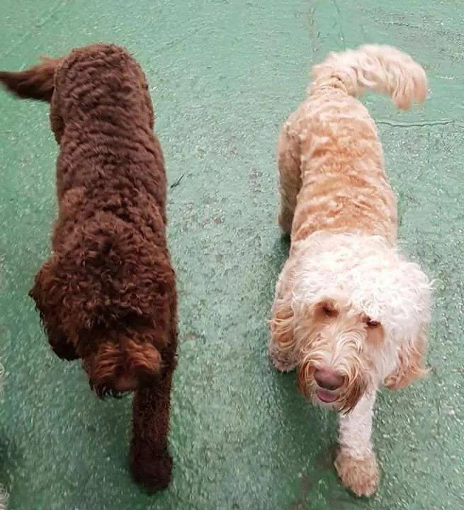 two dogs walking together