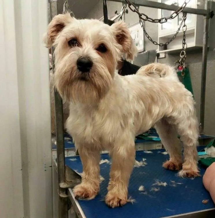Dog Grooming Courses The Paw Pad