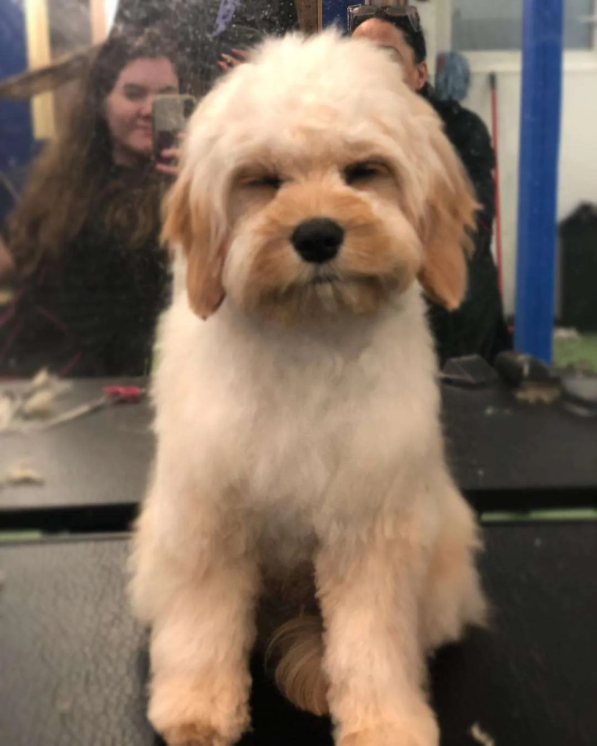 A dog on a grooming table looking cute