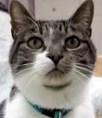 Bagheera the Diabetic Cat wants you to meet Thomas