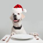 dog_christmas_dinner