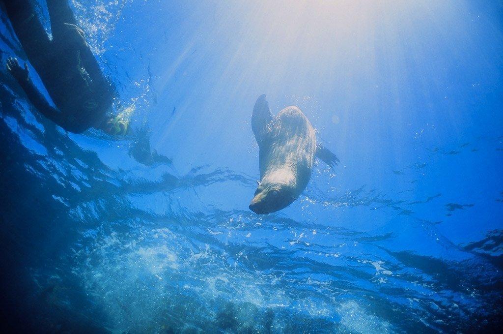 Photo Credit: Seal Swim Kaikoura