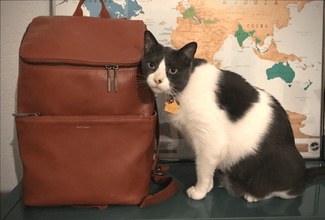 So many beautiful vegan handbags and backpacks these days, it's hard to choose which is my favorite. Do you have one? Here are 7 brands that I'm loving. My cat is a fan too.