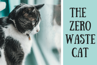 Must-know tips for the zero waste cat