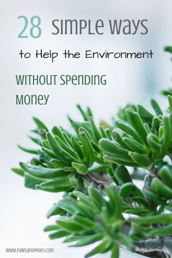Green houseplant with text overlay: simple ways to help the environment without spending money