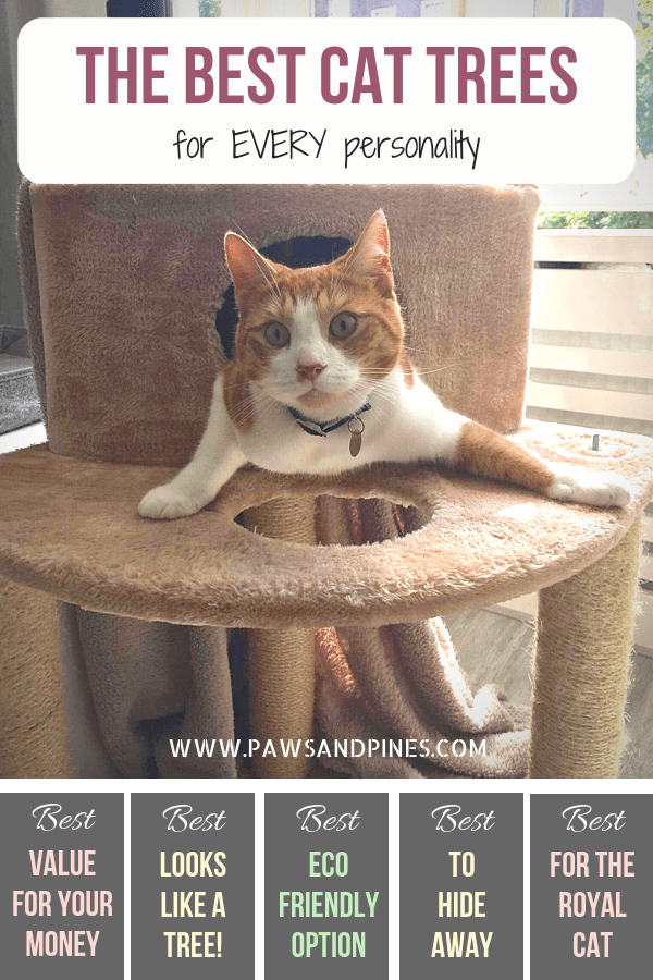 The best cat trees for every personality! Just in time for 'spoil your cat' day, find the best cat tree for your feline friend. Whether you're looking for the best cat tree for large cats, or the best for a royal cat, this list has you covered! #cat #cattree