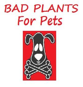 Azalea is Poisonous To Pets Poisonous Plant For Pets