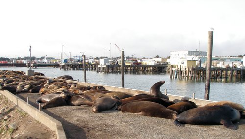 Visiting Crescent City California: Seals, Sea Lions and a ...