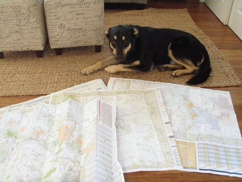 bribed with a treat Boomer looks like he cares (a little more) about planning out our trip!