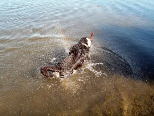 who shakes while still in the water!?!?!?!
