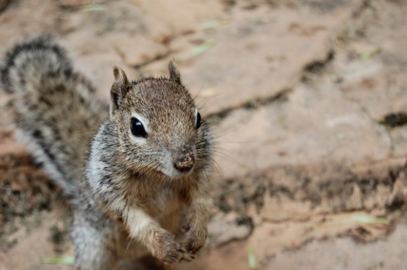 up close shot of a squirrel