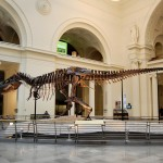 Finding Sue at The Field Museum, Chicago Illinois