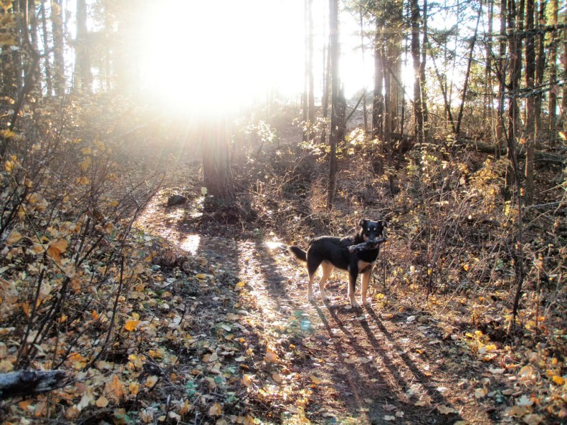 Dog-Friendly Spots Sandpoint Idaho