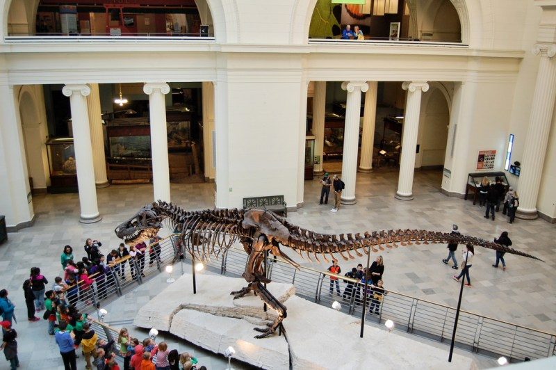 the field museum Chicago Illinois