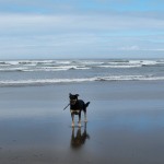 Yaquina Bay State Recreation Site, Newport Oregon