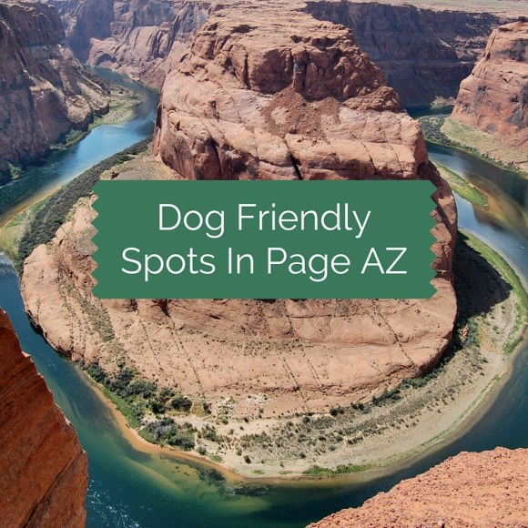 Dog Friendly Spots in Page Arizona