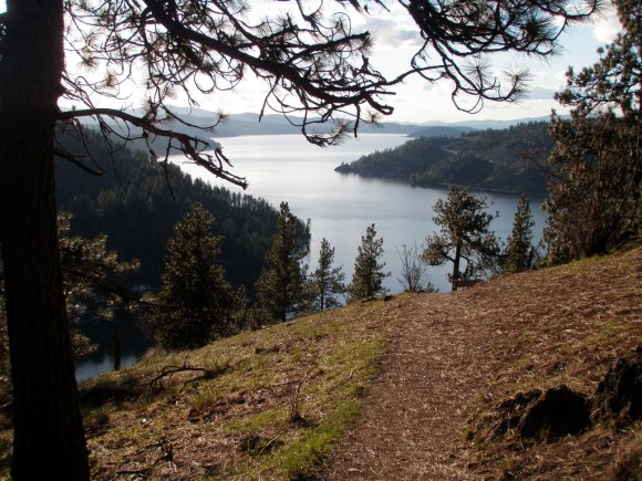 Hiking North Idaho With Your Dog