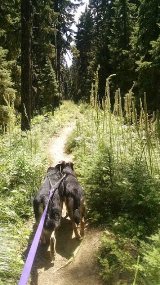 Dog-Friendly Blossom Lake Trail