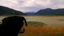 Leaving Paw Tracks on Lake Coeur D' Alene Scenic Byway