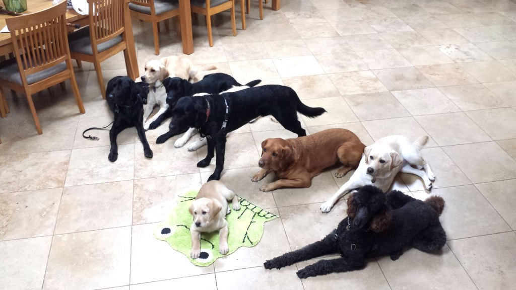 Paws'itive Teams Pups in Training
