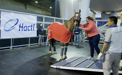 Hactl handles Longines Masters competitors for fifth successive year