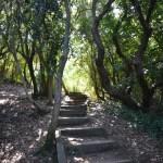 Sentier_du_litoral_frais_sous_les_bois-pays-basque
