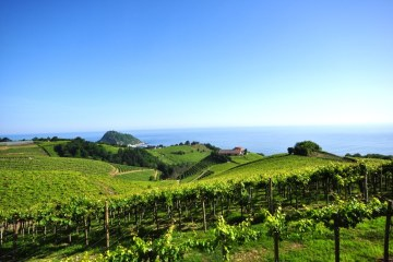 Vins_Txakoli_Getaria-pays-basque