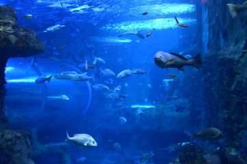 aquarium-de-donostia-san-sebastian-pays-basque-pais-vasco-poisson