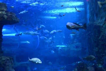 aquarium-de-donostia-san-sebastian-pays-basque-pais-vasco-poisson