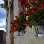 la-vallee-salado-de-anana-en-pais-vasco-fleur
